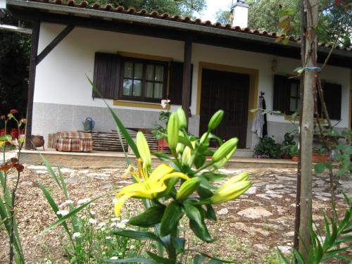Guesthouse D Nuno