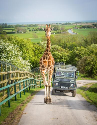 Port Lympne Hotel - 30 of 41