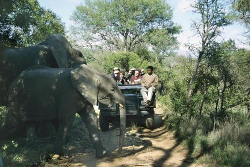 Thornybush Chapungu Luxury Tented Camp Photo