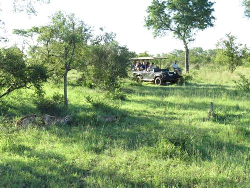 Honeyguide Tented Safari Camps Photo