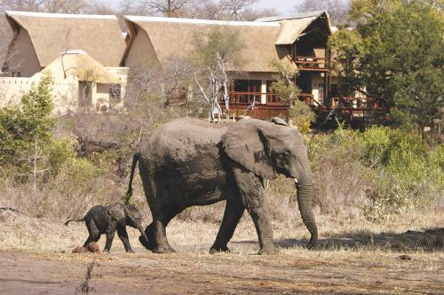 Elephant Plains Game Lodge Photo