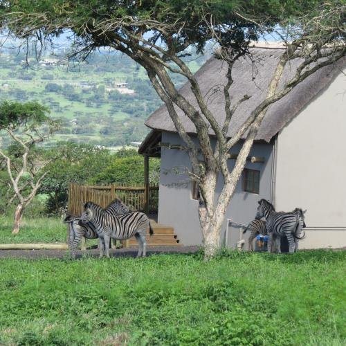 Ukuthula Lodge Photo