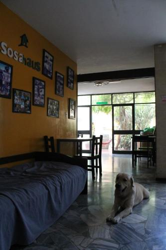 Sosahaus Hostel Mendoza Photo