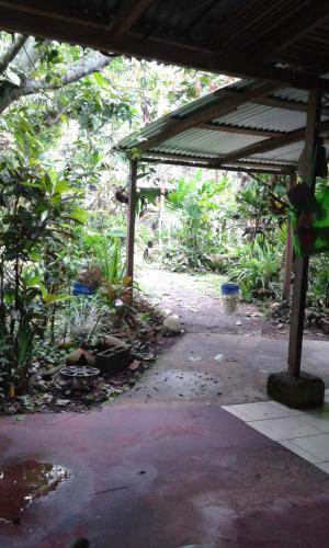 The Tropical Garden Photo