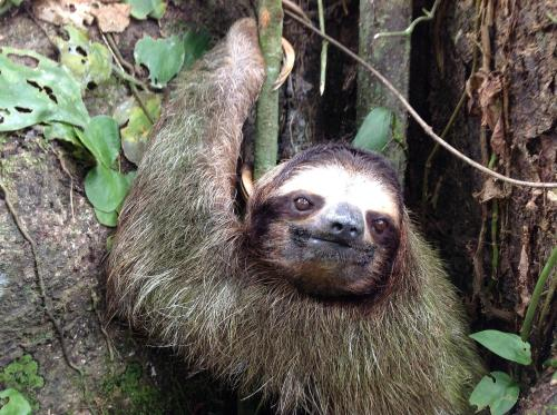 Villa Sloth Photo