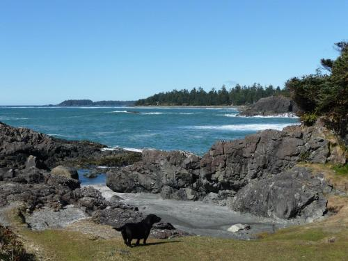 Island Village Properties at South Chesterman's Beach Photo