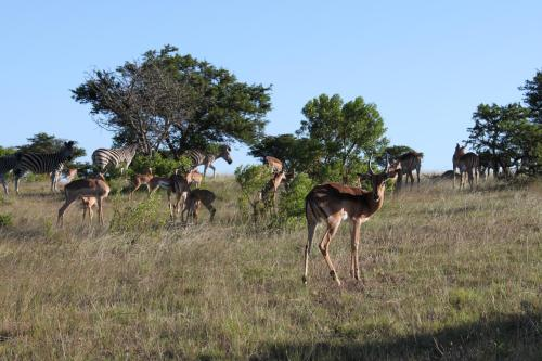 Mansfield Game Reserve Photo