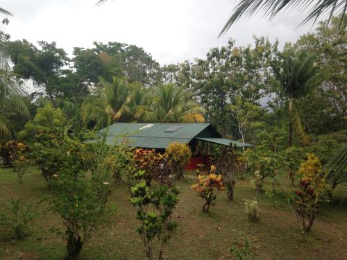 Osa Jungle Cabin Photo