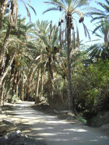 Dar El Kobba Photo