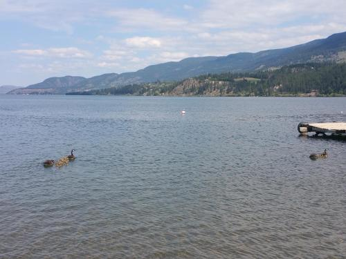 Kokanee Beach Resort Photo
