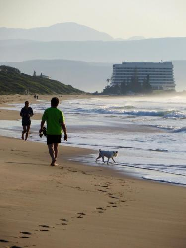 Windfall Plett Photo