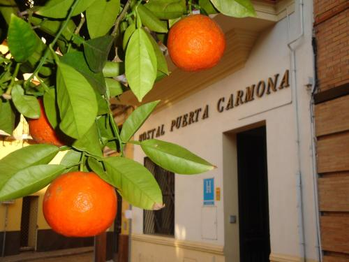 Hostal Puerta Carmona photo 78