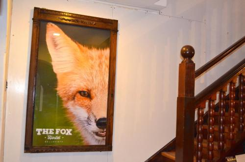 The Fox Hostel Photo