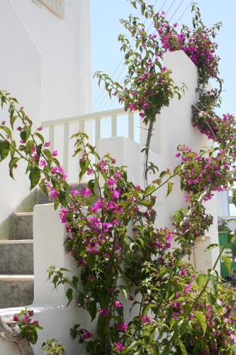 Korali Hotel and Apartments - anti-paros -
