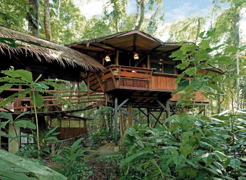 Tree House Lodge Photo