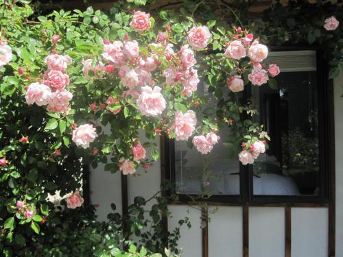 Rose Cottage at The Elms - christchurch -