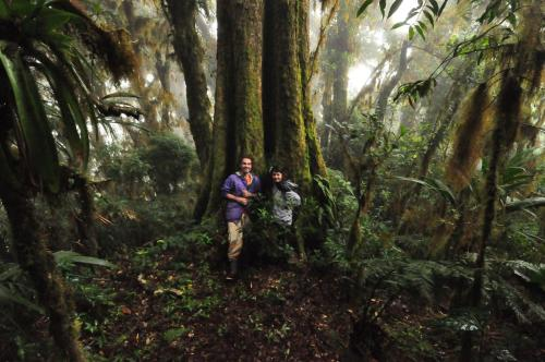 Mount Totumas Cloud Forest Photo