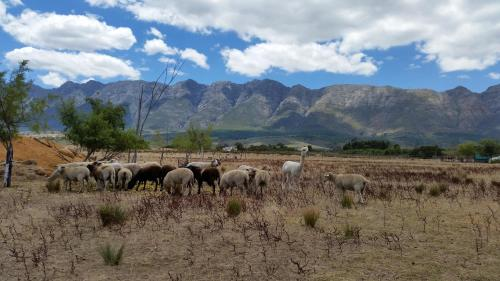 Fynbos Guest Farm Photo