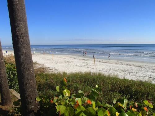 Flamingo Inn Beachfront - Daytona Beach Photo