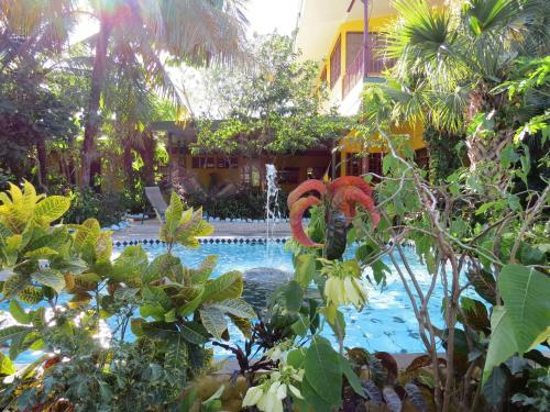 El Mono Loco Hotel Photo