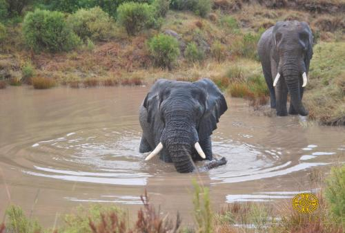 Lalibela Game Reserve Photo