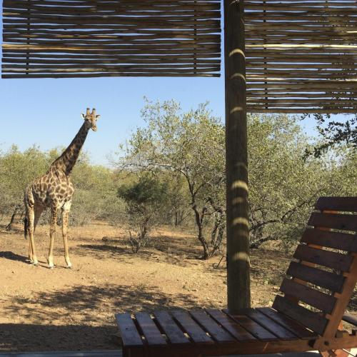 Birdsong Africa Lodge Photo