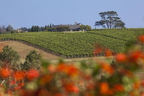 Takatu Lodge & Vineyard, Auckland, Neuseeland, picture 21