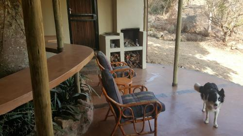 Eco Eden Bush Lodge Photo