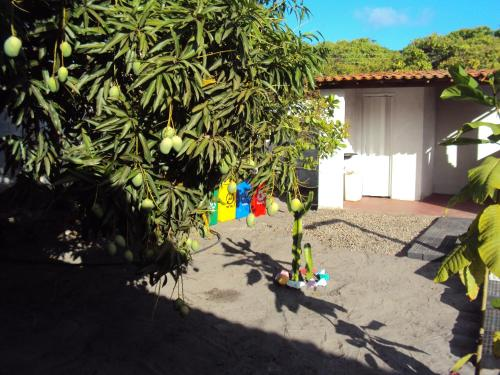 Hostel Rural Vila Flor Photo