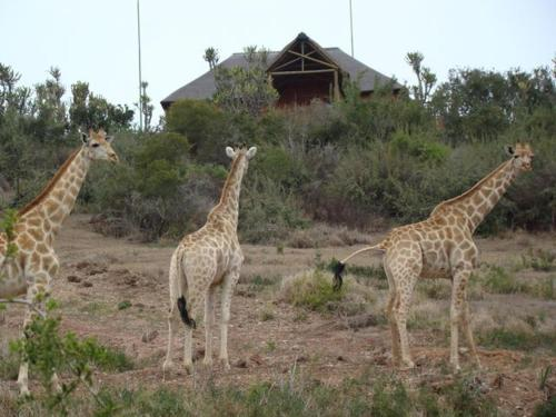 Addo Afrique Estate Photo