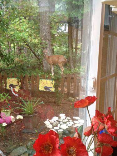 Charm of Qualicum Bed and Breakfast Photo