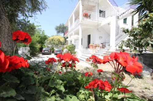 Angeliki Studio and Apartment - Gaios Greece