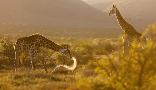 Samara Private Game Reserve Karoo Lodge Photo