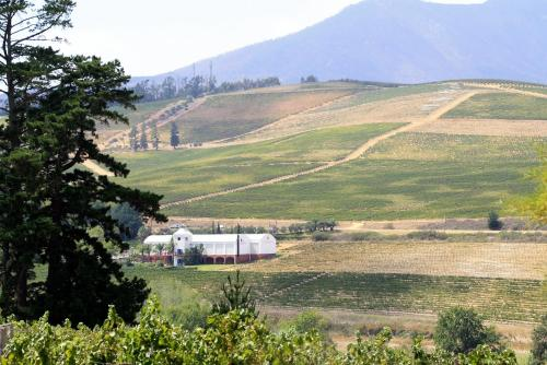 Laibach Vineyards Photo