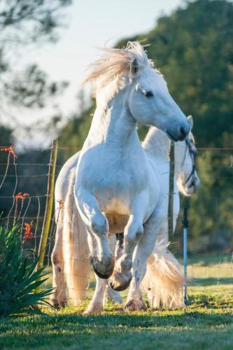 Outeniqua Moon Percheron Stud Farm Photo