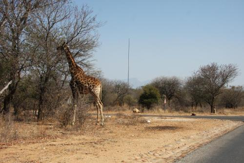 Giraffe Lodge Photo