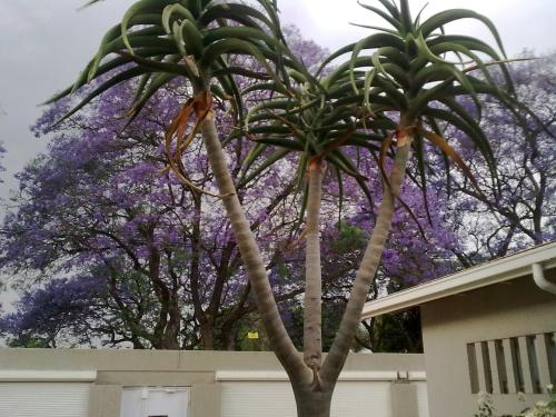 Rosebank Lodge Guest House Photo