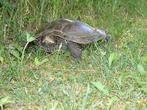 Turtle Crossing Cottage Photo