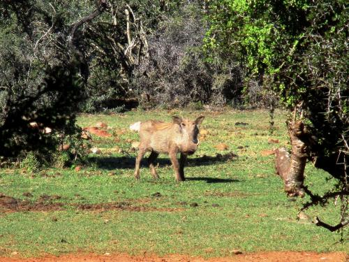 Valley Bushveld Country Lodge Photo