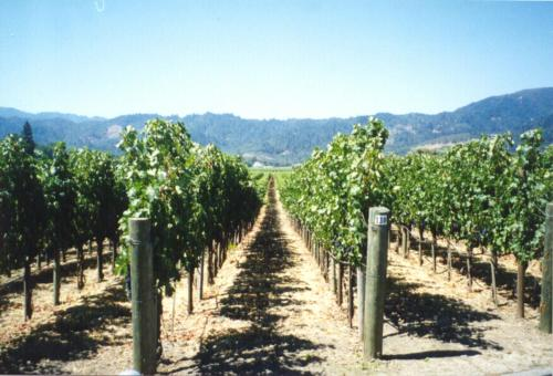 San Marcos Creek Vineyard & Winery Photo