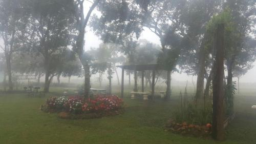 Bosque Da Neblina Photo