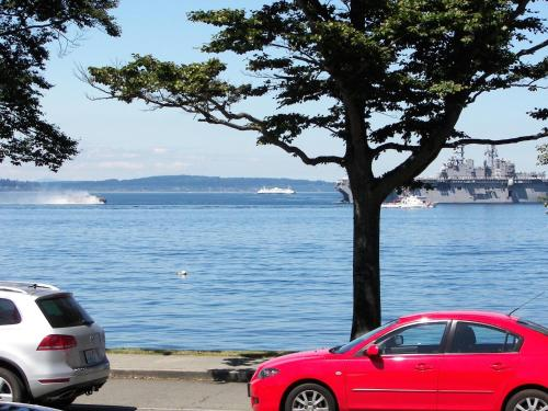 Magpie on Alki Photo
