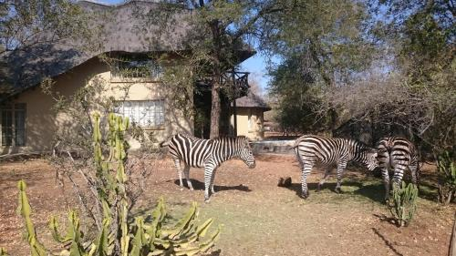 Kruger River Villas Photo