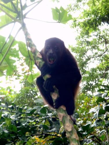 Howler Monkey Hotel Photo