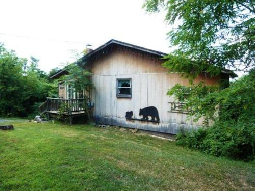 Bear Pad Photo