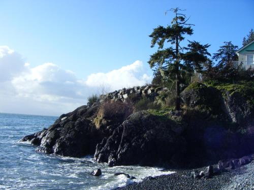 Orca View Cottage Photo