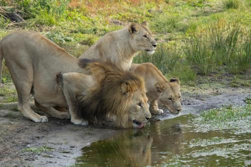 Sibuya Game Reserve and Lodge Photo