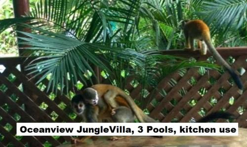 Jungle Villa Photo
