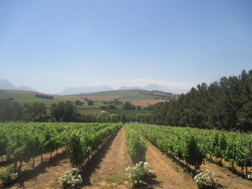 Clos Malverne Wine Estate Photo