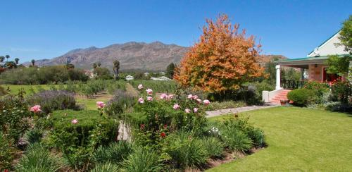 Montagu Vines Photo